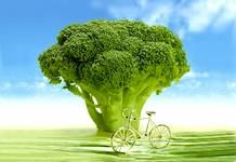 Le brocolis, précieux allié de notre santé