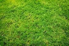 Réparer la pelouse