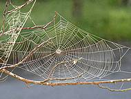 Eloigner les araignées