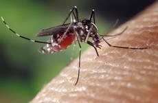 Les moustiques, ça piquent !