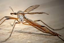 Chasser les moustiques